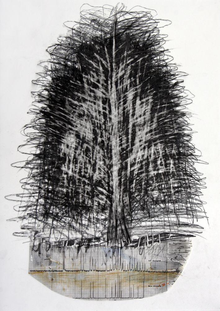 Baum - Dialog, Bleistift, Kohle, Collage, 70 x 50 cm