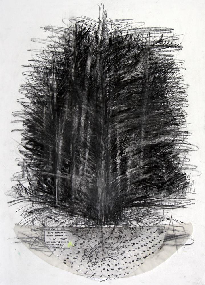 Baum im Wald und Wald im Baum, Bleistift, Kohle, Collage, 70 x 50 cm