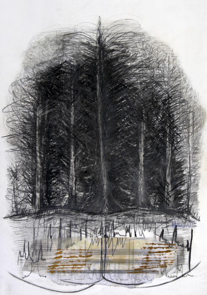 Baum im Wald und Wald im Baum, Bleistift, Kohle, 70 x 50 cm